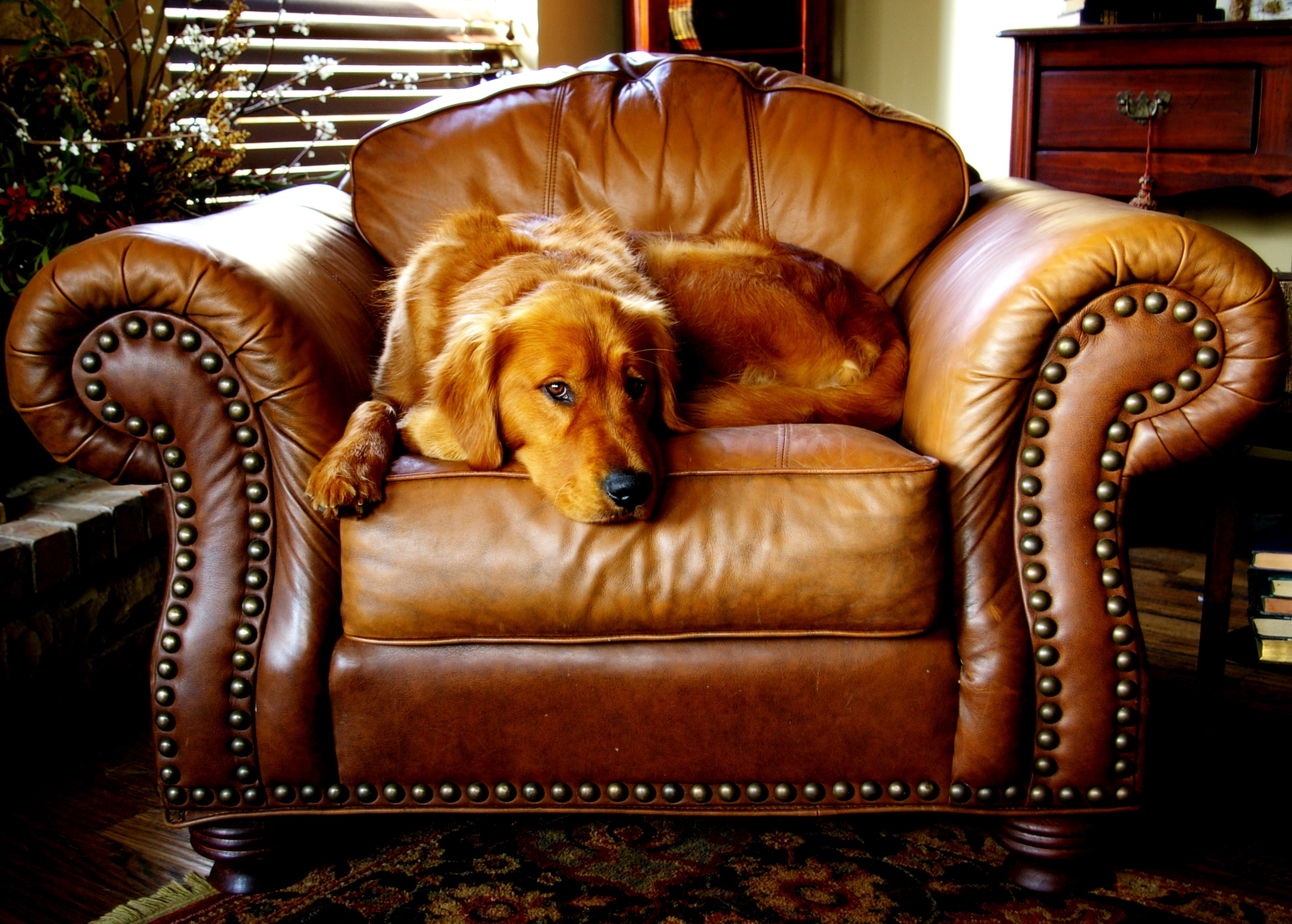 Aloha Chem-Dry leather cleaning service
